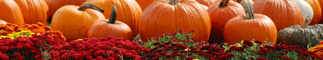 mums-and-pumpkins.png
