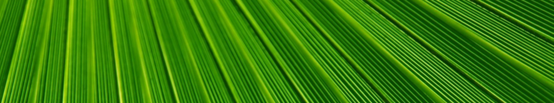 Green leaves lines banner 1086x202