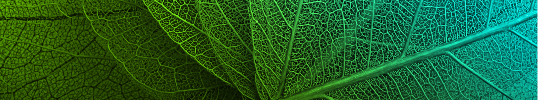 Green transparent leaves banner 1086x202.jpg